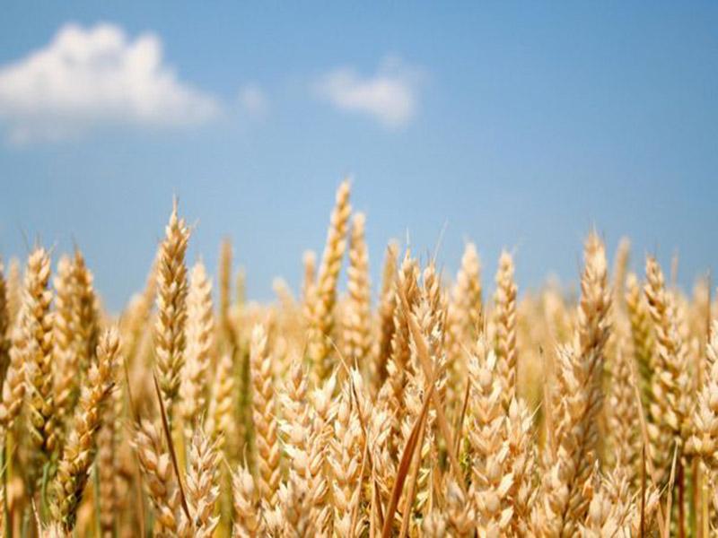 安徽省小麦赤霉病防控工作结尾
